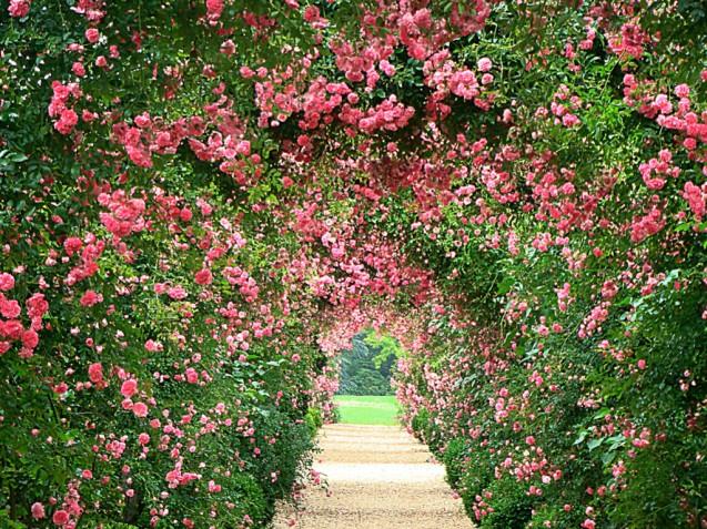rose-garden-wallpapers